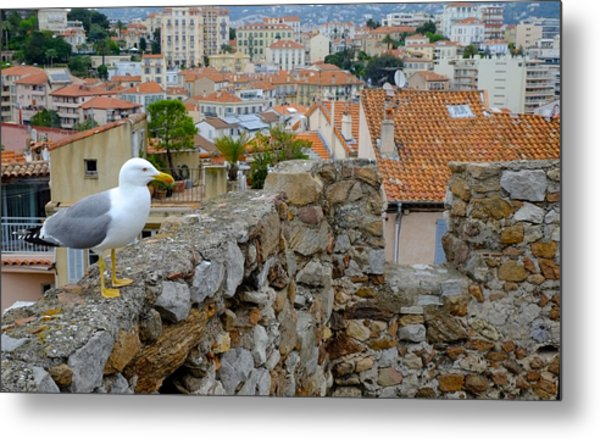 Seagull In Cannes Old City Metal Print