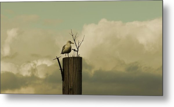 Seagull Lookout Metal Print
