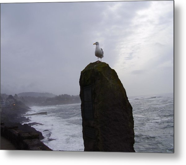 Seagull On A Boulder Metal Print by Yvette Pichette