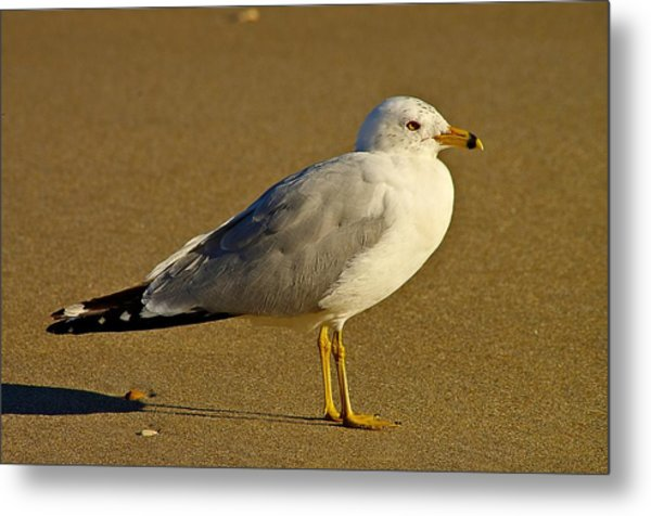 Seagull On The Beach Metal Print