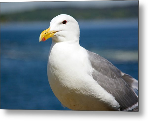 Seagull On The Sound Metal Print