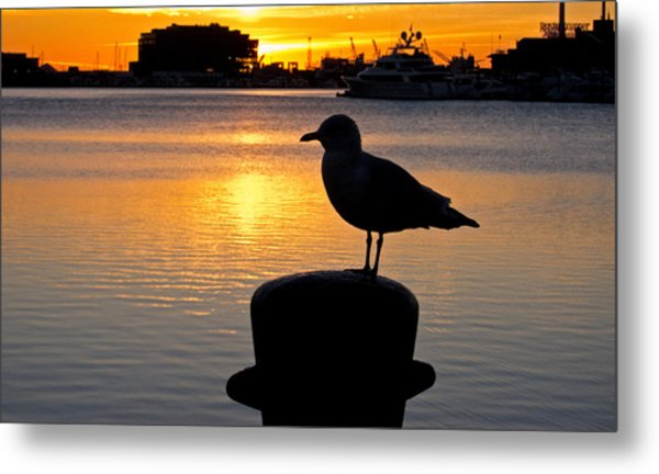 Seagull Silhouette Sunrise Metal Print