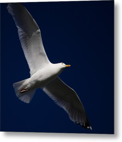 Seagull Underglow Metal Print