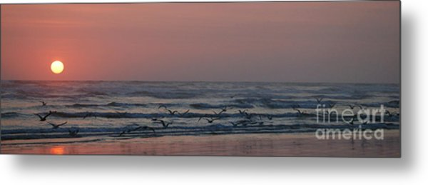 Seagulls At Sunset Metal Print