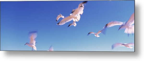 Seagulls Flying Along Route A1a Metal Print