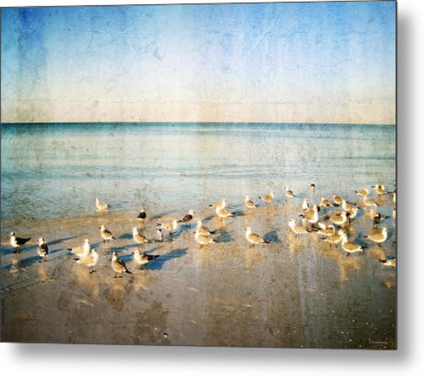 Seagulls Gathering By Sharon Cummigs Metal Print by William Patrick
