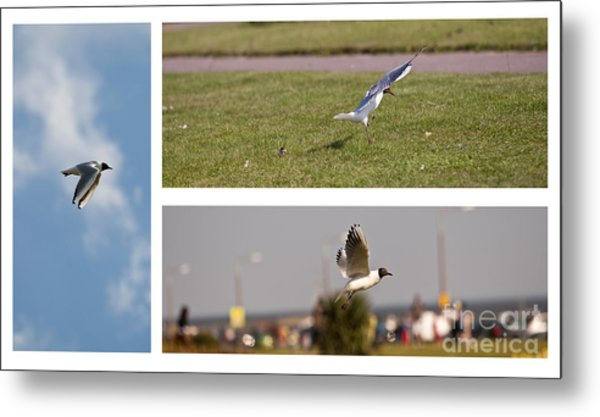 Seagulls Metal Print by Lesley Rigg