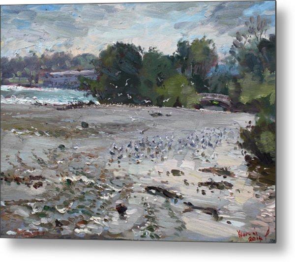 Seagulls On Niagara River Metal Print