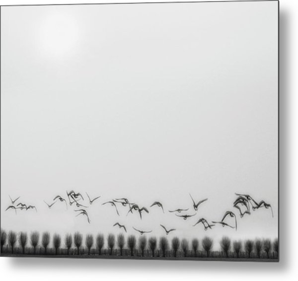 Seagulls Over The Fields Metal Print