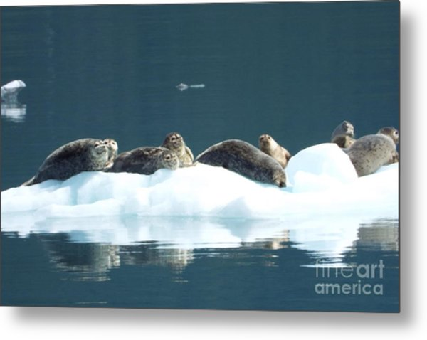 Seal Reflections Metal Print