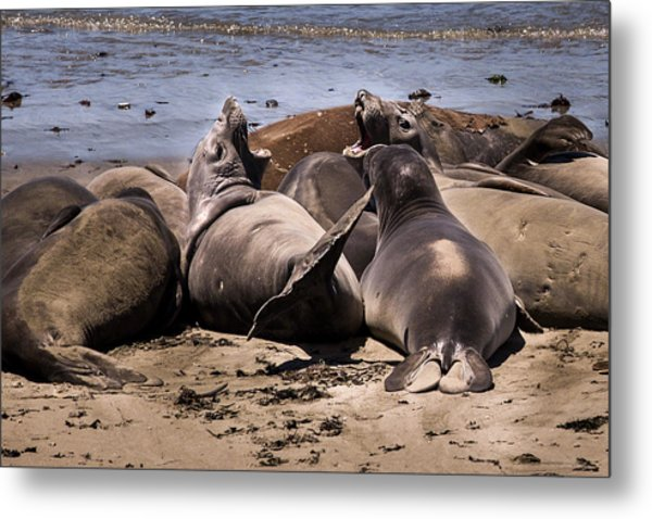 Seal Team 3 By Denise Dube Metal Print