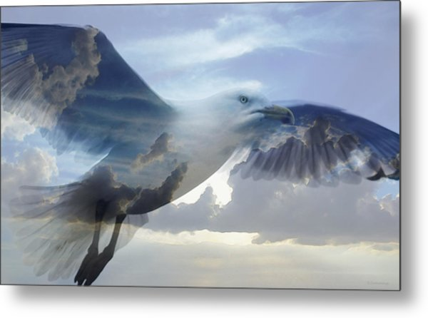 Searching The Sea - Seagull Art By Sharon Cummings Metal Print