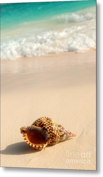Seashell And Ocean Wave Metal Print