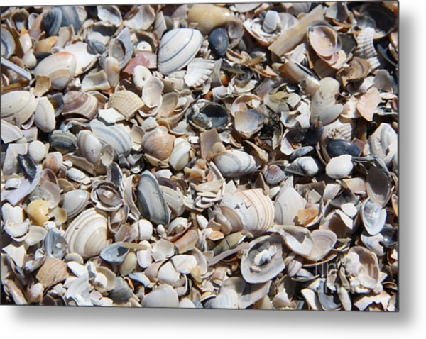 Seashells On The Beach Metal Print