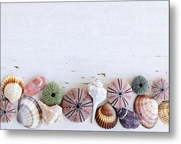 Seashells On Wood Background Metal Print
