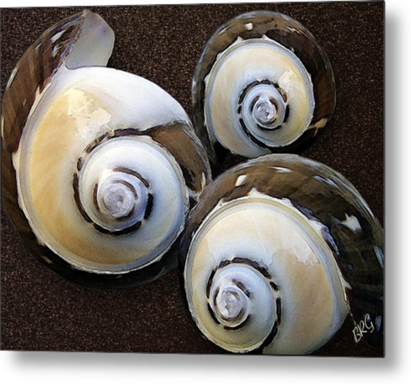 Seashells Spectacular No 23 Metal Print