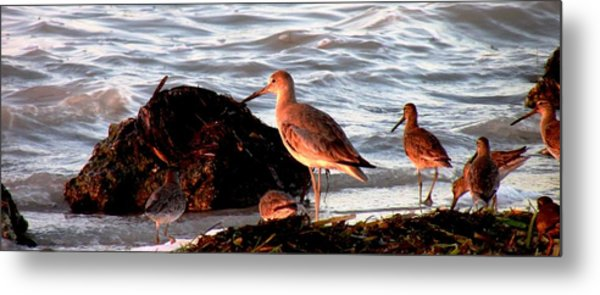 Seaside Diner Metal Print by Will Boutin Photos
