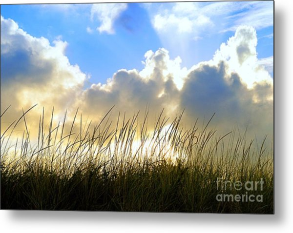 Seaside Grass And Clouds Metal Print