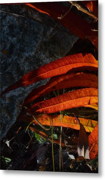 Seasonal Color Theory Metal Print