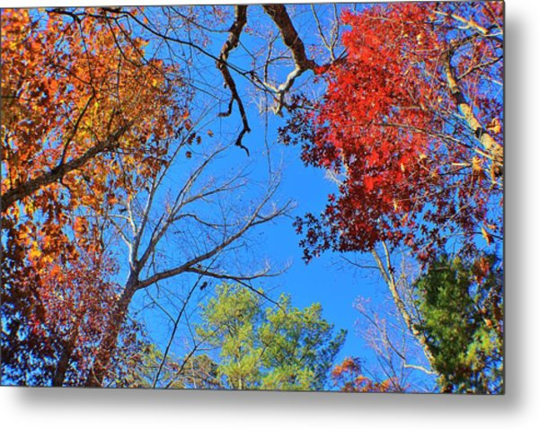 Seasons Metal Print