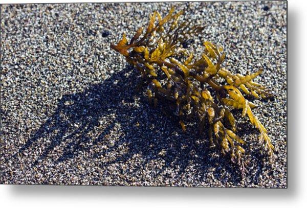 Seaweed Shadow Metal Print
