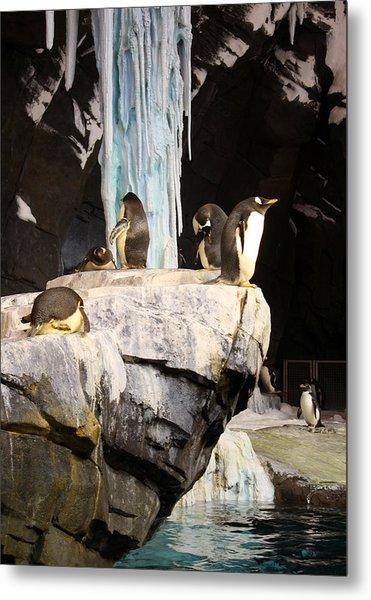 Seaworld Penguins Metal Print