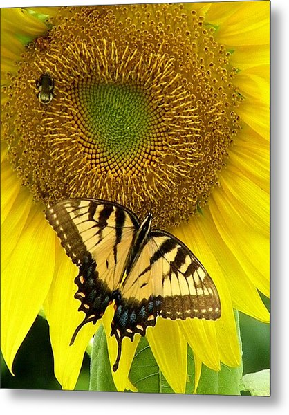 Secret Lives Of Sunflowers Metal Print