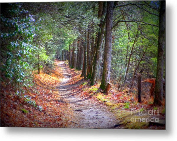 Secret Pathway 1 Metal Print