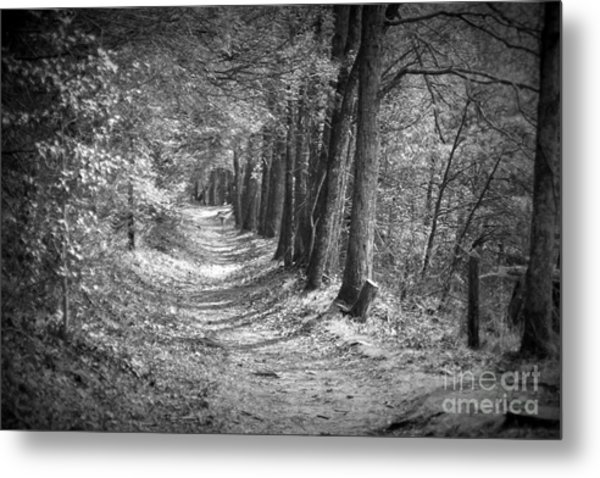 Secret Pathway Metal Print