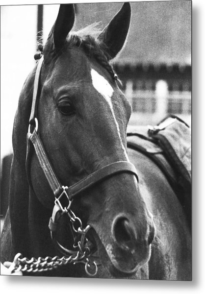 Secretariat Vintage Horse Racing #02 Metal Print