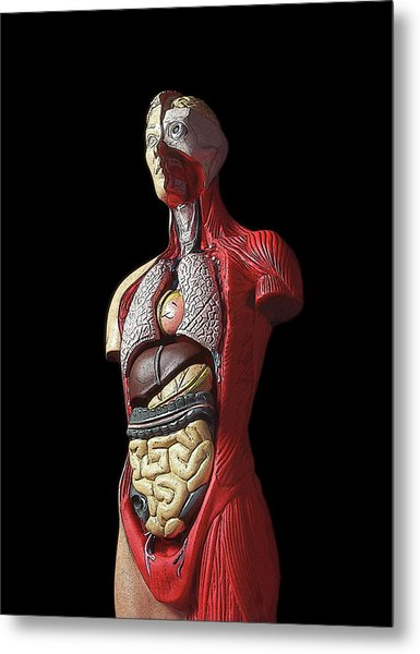 Sectioned Human Body Metal Print