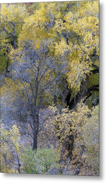 Sedona Fall Color Metal Print