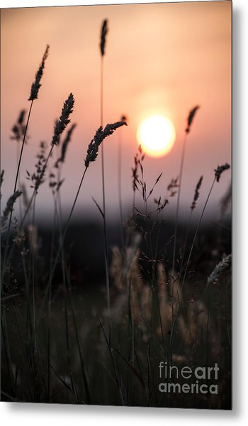 Seed Heads At Sunset Metal Print