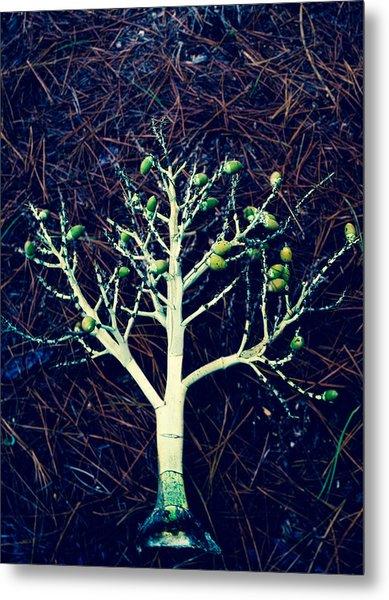 Seeded Tree's Metal Print