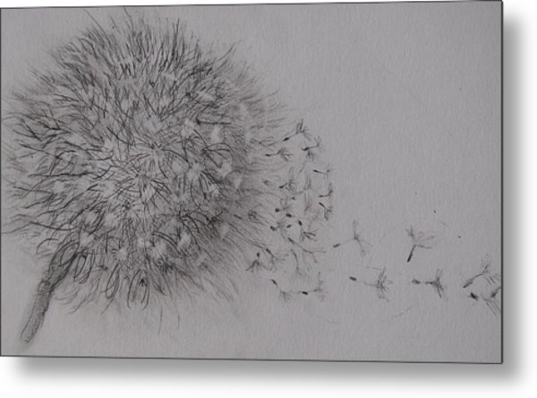 Seedhead Metal Print by Anne Parker