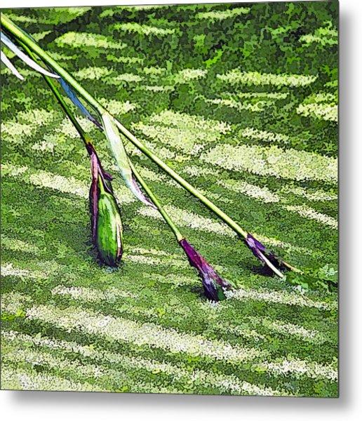 Seedpods In Pond Moss Metal Print