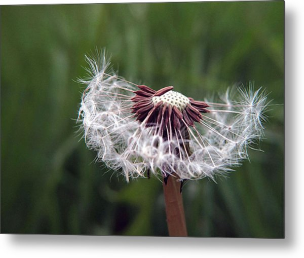 Seeds And Stems Metal Print