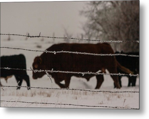 Seeking Shelter From The Cold Metal Print