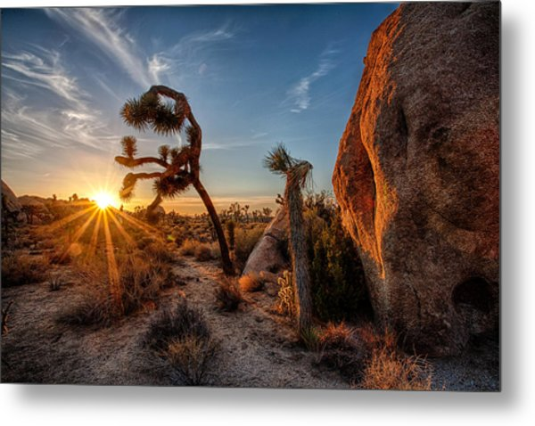 Seeking The Light Metal Print by Peter Tellone