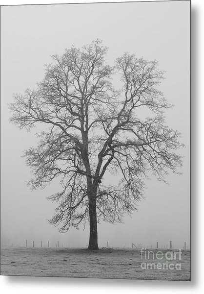 Sentry Oak Metal Print