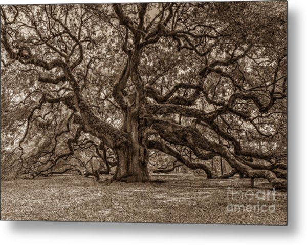 Sepia Angel Oak Metal Print