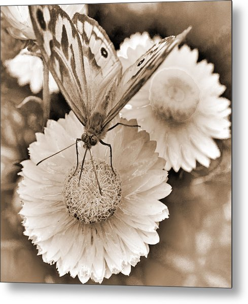 Sepia Monarch Butterfly On Paper Daisy Metal Print by Patrick OConnell