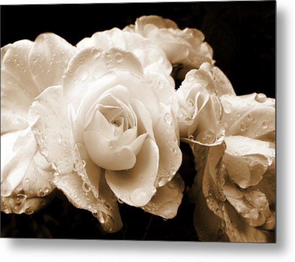 Sepia Roses With Rain Drops Metal Print