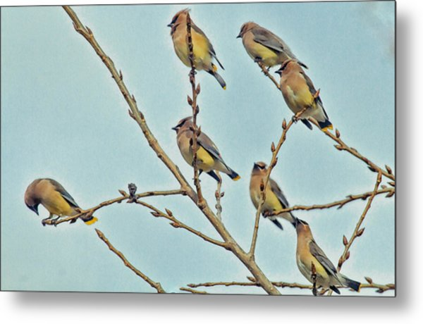 Septet Metal Print by Constantine Gregory