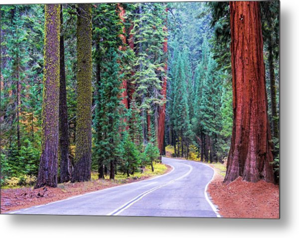 Sequoia Hwy Metal Print