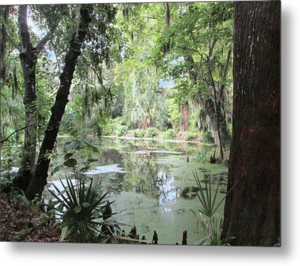 Serene Swamp Metal Print by Silvie Kendall