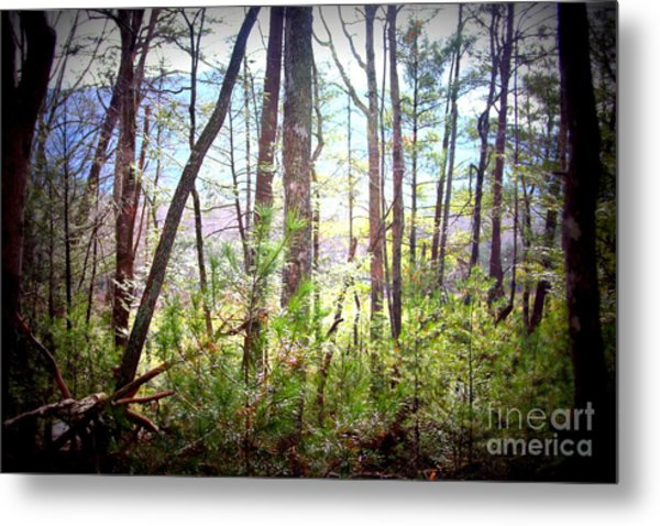 Serene Woodlands Metal Print