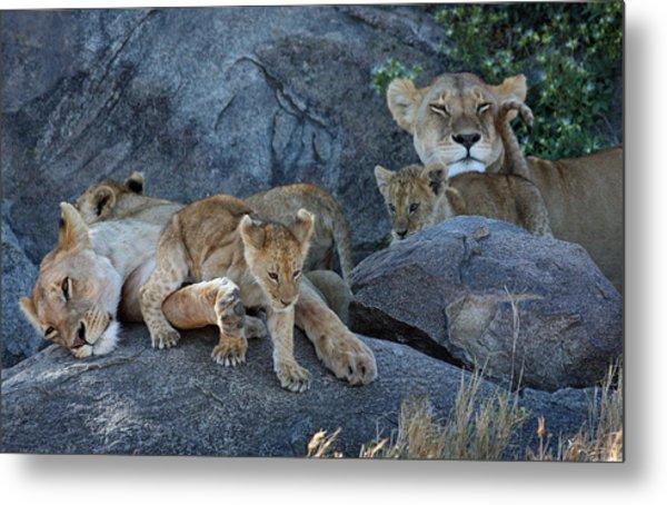 Serengeti Pride Metal Print