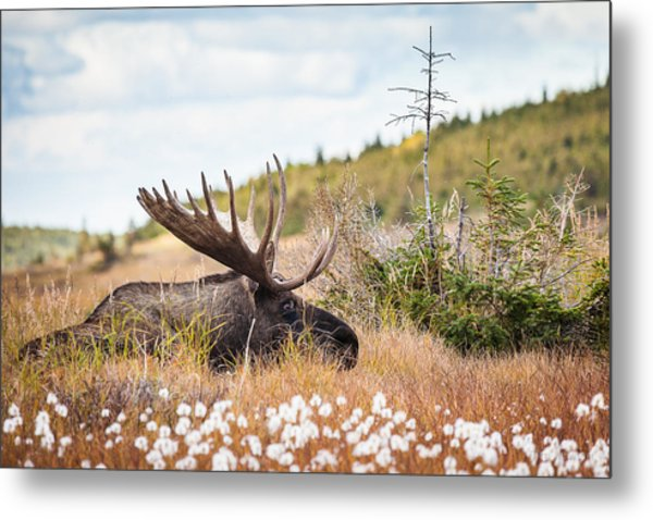 Metal Print featuring the photograph Serious Lady-watching by Tim Newton