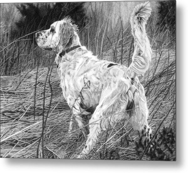 Metal Print featuring the drawing Setter In The Field by Rob Christensen